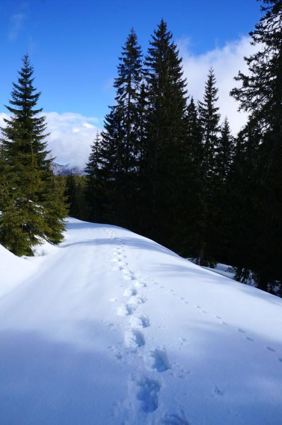 Langer Forstweg © Gipfelfieber.com