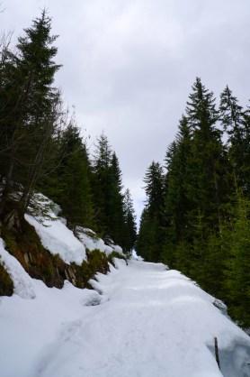 Abstieg über Forstwege nach der Feichtenalm © Gipfelfieber.com