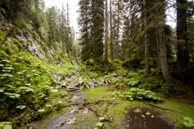 Aufstieg durch den Wald © Gipfelfieber.com