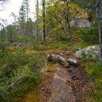 Der Steig am Langfoss © Gipfelfieber.com