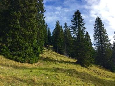 Durch den Wald © Gipfelfieber.com