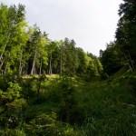 Eine Waldschneise empor ©Gipfelfieber