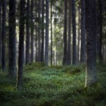 Finnischer Wald ©Visit Finland/Photographer: Seppo Rinta-Kauppila