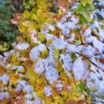 Herbst küsst Winter ©Gipfelfieber