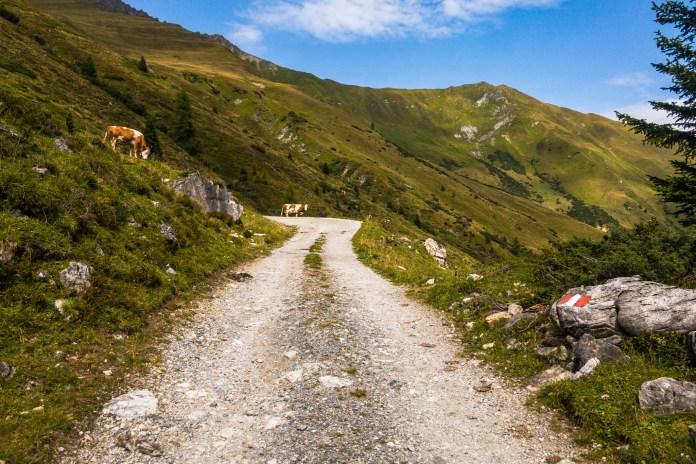 Wo das Zillertal zur Ruhe kommt: Almwandern zur Stoankasern ©Gipfelfieber
