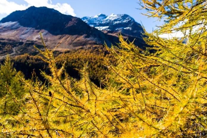 7 Tipps für sicheres Wandern im Herbst ©Gipfelfieber
