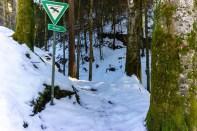 In den Wald hinein ©Gipfelfieber