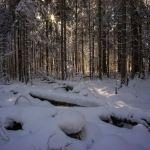 Die Sonne scheint durch die Bäume ©Gipfelfieber