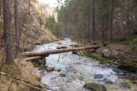 Der Baumstamm hilft beim Überqueren ©Gipfelfieber