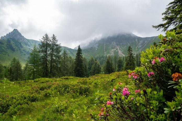 Rundtour über den Draugstein: Steinriese im Almenland