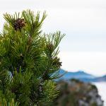 Latschen am Gipfel ©Gipfelfieber