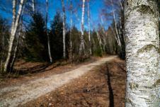 Durch Wälder ©Gipfelfieber