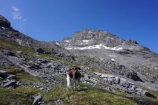 Mit Hund auf dem Sentiero della Pace ©Etappen-Wandern.de