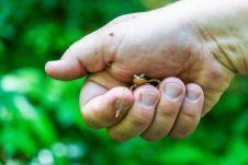 Kleine Kröte ©Gipfelfieber