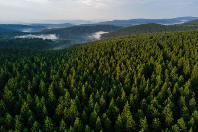 Projekt 16 Gipfel: Großer Beerberg, Schneekopf und Thüringer Träume