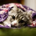 猫が好きな人へのプレゼントに困ったらコレ!飼い主もネコも喜ぶグッズ10選