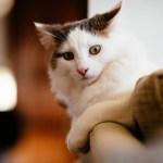 ネコ好きの人に贈りたいギフト♡ネコのノートいろいろ