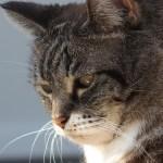 ヒグチユウコさんの本は猫好きの人への贈り物に最適!