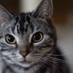 シュールな猫本を贈って、猫好きな人と笑いと涙を分かち合おう!