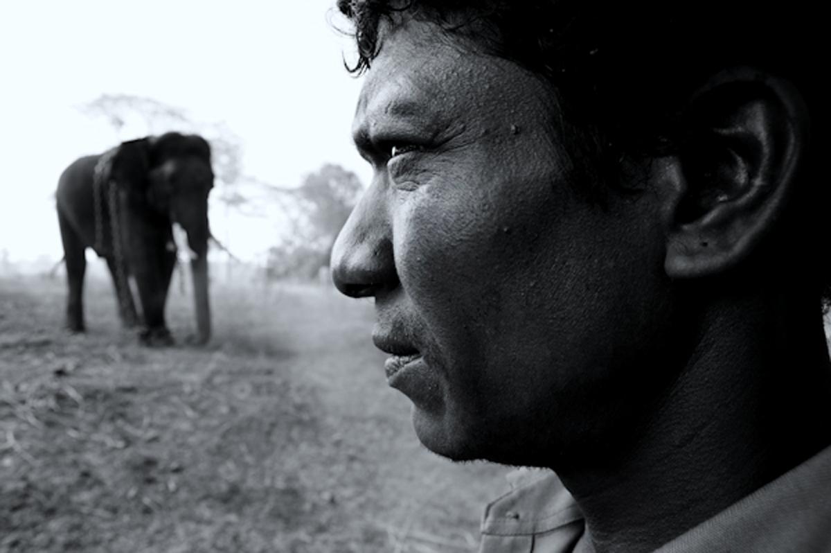 Mahut in Dubare elephant camp, Karnataka