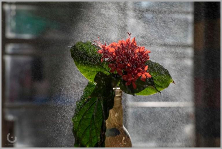 red flower_CD20840