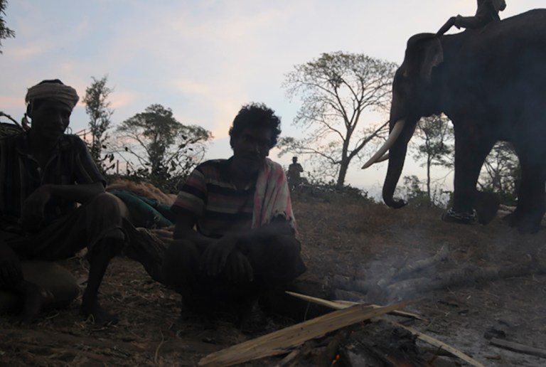 Mahut-elephant-39