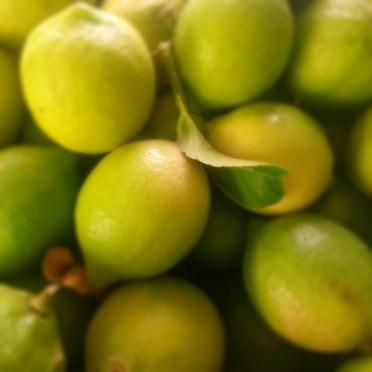 verdelli