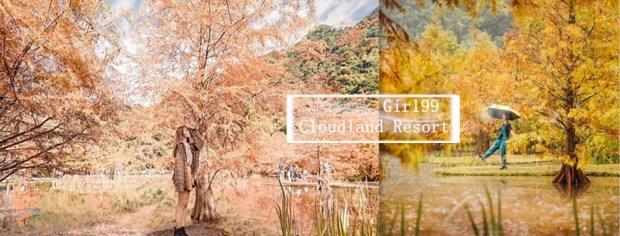 苗栗「落羽松」超美景點/一年只有這時候才能看到的絕美風景~就像走出畫般!