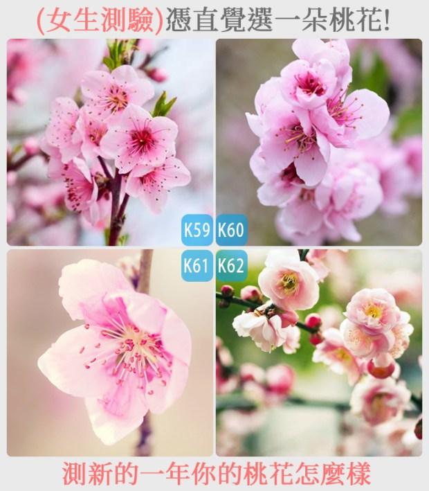 441_憑直覺選一朵桃花,測新的一年你的桃花怎麼樣_主圖