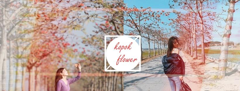 季節限定!春日裡的一列烽火,被譽為全球最美花海街道之一的木棉花道!