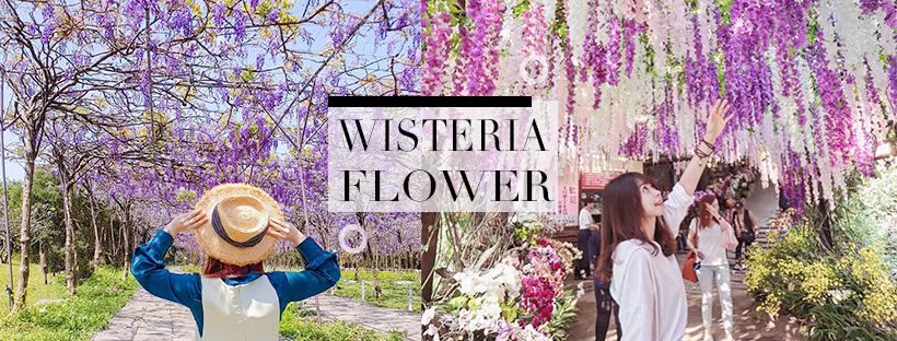 紫色仙境所在!春日紫色浪漫限定~美到讓人屏息的紫藤花瀑布,這幾個夢幻仙境你絕對不能錯過!