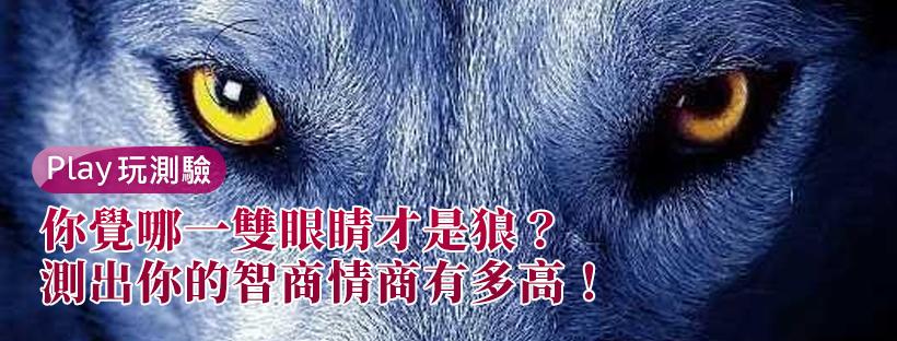 你覺哪一雙眼睛才是狼?測出你的智商情商有多高!