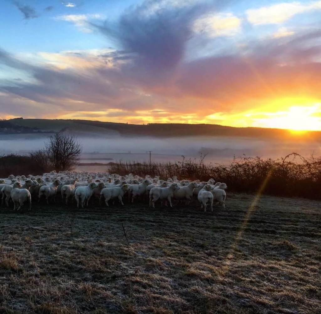January on the farm…
