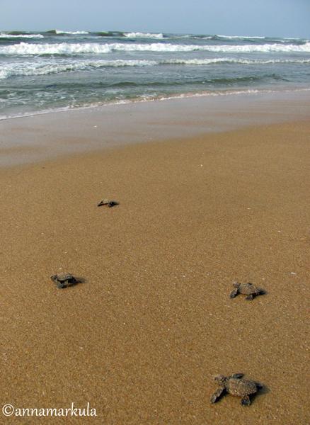 four_turtles