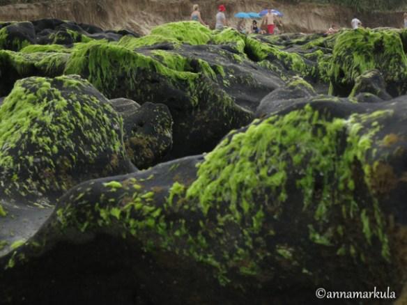 coffeerock_and_algae