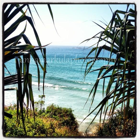 pandanus_beach