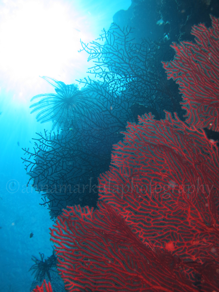 gorgonian_layers