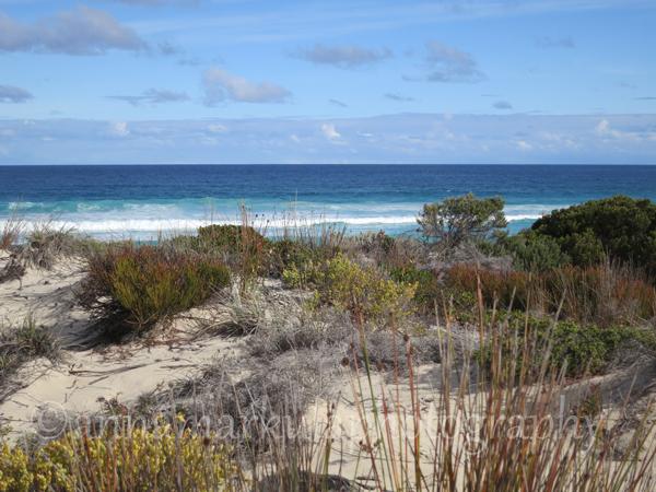 South_Australia_coastal_vegetation