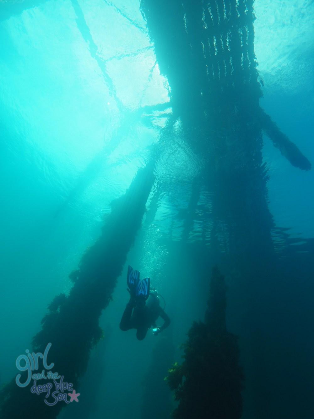 underwater Rapid Bay Jetty diver sunlight