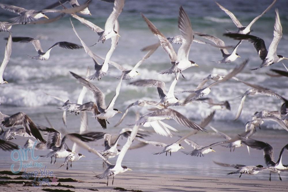 flock of terns flying beach