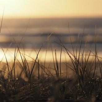 Spinifex Sunrise