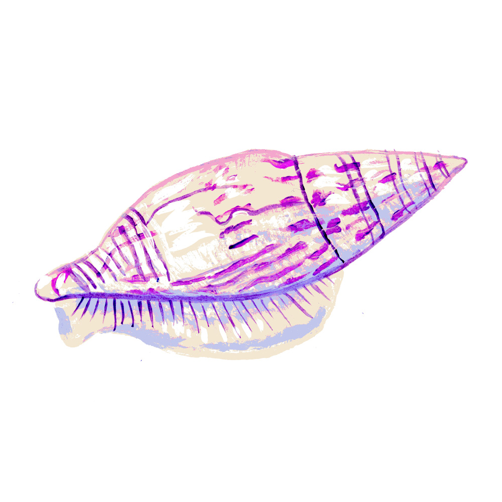 painting of shell