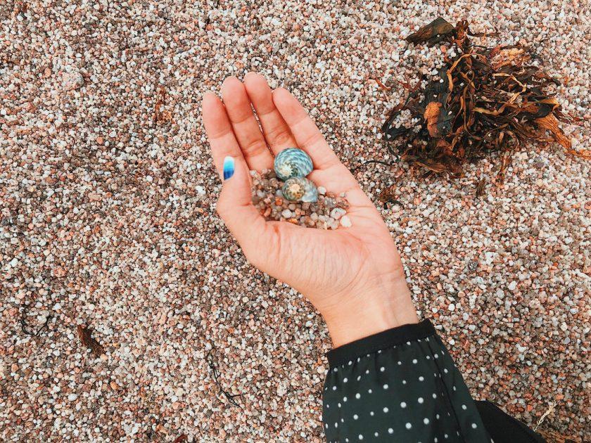 Beautiful shells at Sleepy Beach