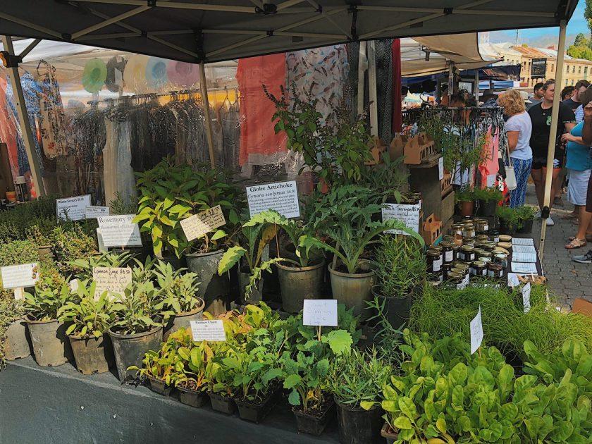 Fresh herbs at Salamanca Market