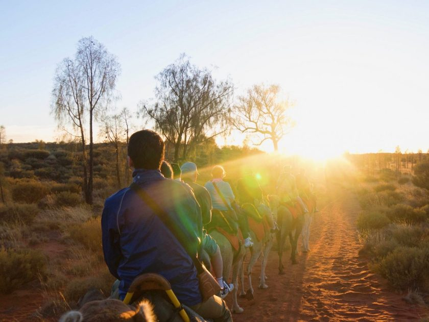 Uluru Sunrise Camel Tour