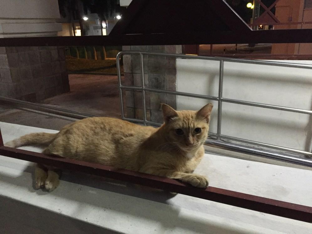 The neighborhood cat, I have named him Klaus.