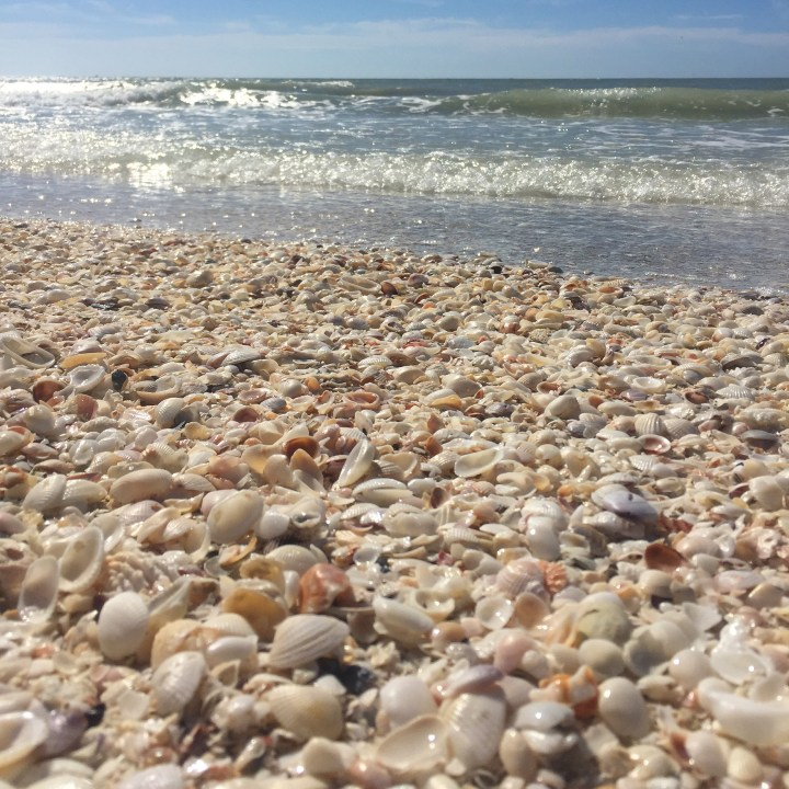 Take a trip…to Sanibel Island, Florida