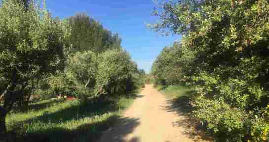 French Holidays in May - Jogging the Alpilles