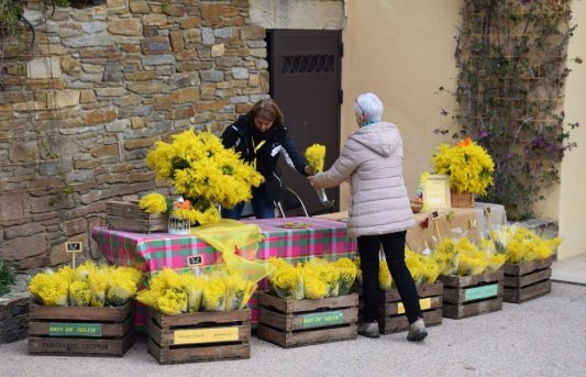 Mimosa Photo Gallery - Flower stand