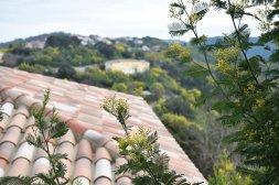 Mimosa Photo Gallery - Tanneron village background